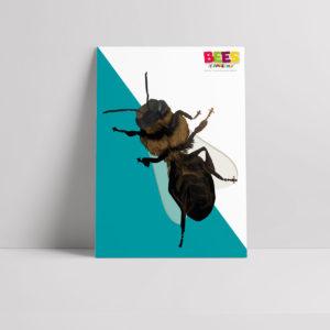 Dead Bee Poster