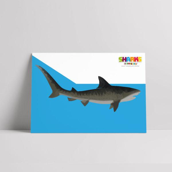 Friendly Shark Poster
